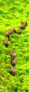 Wild Elephants at Grass Hills