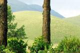Valparai View